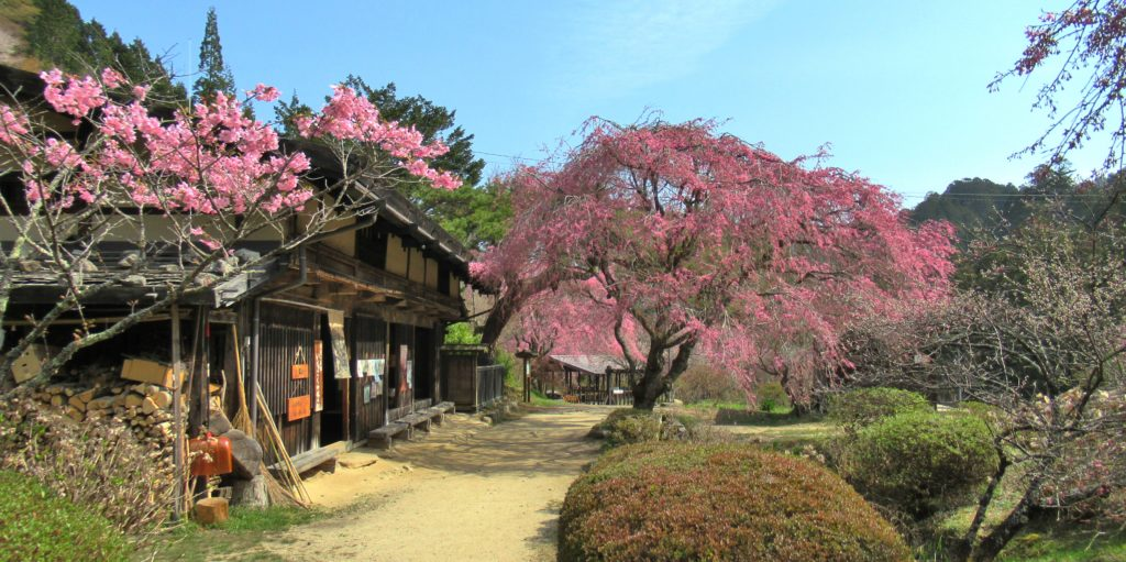 Ichikokutochi Tatebachaya